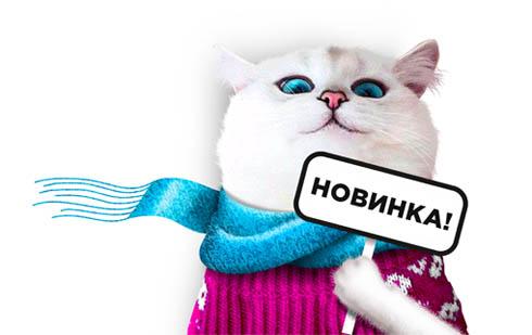 Белый кот кирове
